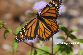 Visits of a Monarch